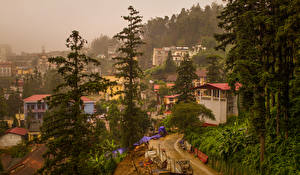 Bilder Vietnam Haus Fichten Bäume Sapa Städte