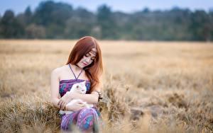 Fonds d'écran Asiatique Chat domestique Aux cheveux bruns S'asseyant
