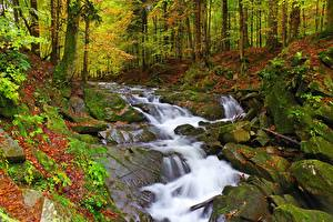 Images Autumn Stones Forests Creeks Moss