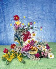 Hintergrundbilder Kamillen Nelken Design Blumen