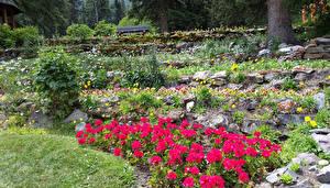 Hintergrundbilder Kanada Park Steine Begonien Banff Cascade Gardens Natur
