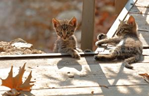 Image Cats Kittens Two Boards animal