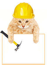 Wallpaper Cats Template greeting card White background Helmet Paws Funny
