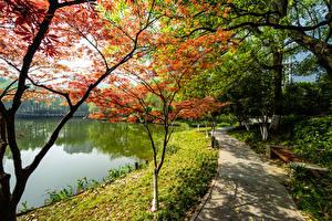 デスクトップの壁紙、、中華人民共和国、京都市、公園、湖、木、自然