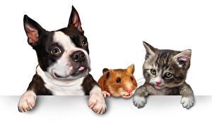 Bilder Hunde Katze Hausmeerschweinchen Weißer hintergrund Drei 3 Welpe Katzenjunges Bulldogge Pfote