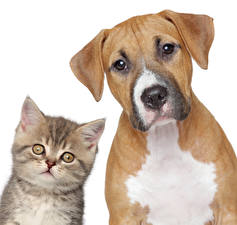 Image Dogs Cats White background Two Kittens Animals