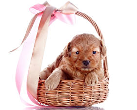Wallpapers Dogs White background Wicker basket Puppies Bowknot Paws animal