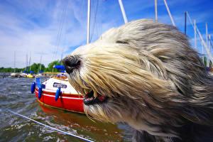 Fotos Hunde Windig Schnauze Komische Tiere