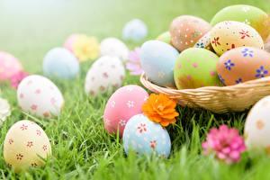 Hintergrundbilder Ostern Großansicht Ei Gras