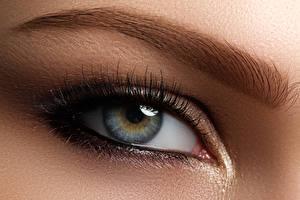 Bilder Augen Großansicht Wimper Mädchens