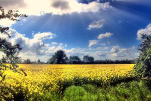 Photo Fields Sky Oilseed rape Clouds Rays of light Nature