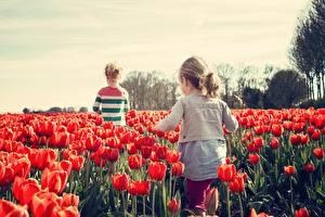 Hintergrundbilder Felder Tulpen Viel Kleine Mädchen Rot Kinder