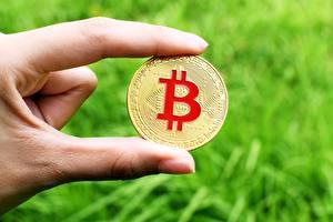 Photo Fingers Closeup Bitcoin Coins Money Gold color