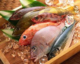 Hintergrundbilder Fische - Lebensmittel Eis