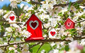 Fotos Blühende Bäume Ast Herz Malus Nest box Blumen