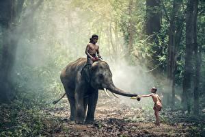 Fotos Wälder Elefanten Asiatische Junge Nebel Kinder