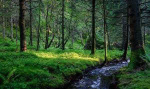 Hintergrundbilder Wälder Flusse Norwegen Bäume Bach Natur