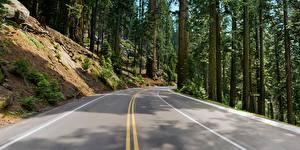 Fotos Wälder Straße Bäume Asphalt
