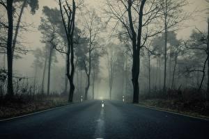 Picture Forests Roads Trees Fog Asphalt Nature