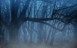 Fotos Wälder Bäume Nebel Ast Natur