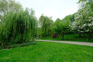 Photo Germany Parks Lawn Trees Botanischer Garten Solingen