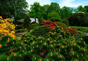 Fotos Deutschland Park Strauch Botanischer Garten Solingen