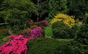 Fotos Deutschland Park Rhododendren Strauch Botanischer Garten Solingen