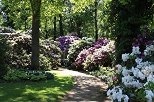 Hintergrundbilder Deutschland Park Rhododendren Strauch Rhododendronpark Bremen Natur