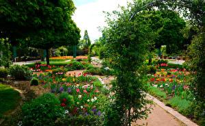 Bilder Deutschland Park Tulpen Strauch Botanischer Garten Solingen Natur