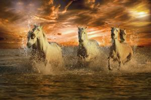 Image Horses Water White Run Spray Animals