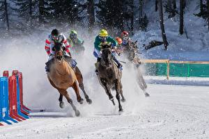 Pictures Horses Winter Snow Running international White Turf horse racing Sport