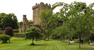 Images Ireland Castles Fortress Grass Trees Blarney Castle, county Cork Cities