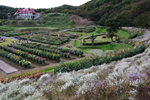 Fonds d'écran Japon Jardins Arbrisseau Akita international dahlia garden Nature images