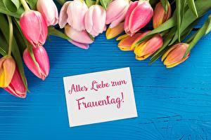 Fotos 8 März Tulpen Deutsche Blumen
