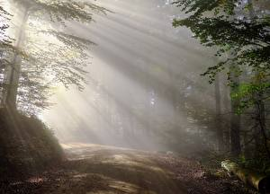 Pictures Morning Forests Roads Fog Trees Rays of light