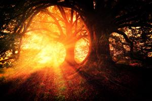 Picture Morning Sunrises and sunsets Forests Trees Rays of light