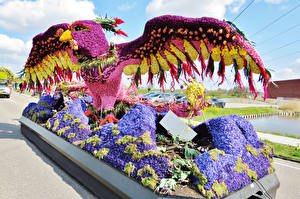 Picture Netherlands Parks Parrots Hyacinths Design Lisse Nature