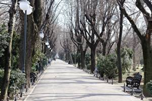 Pictures Parks Romania Bench Trees Street lights Allee Pavement Bucharest Cities