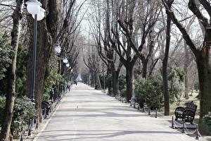 Sfondi desktop Parchi Romania Panchina Alberi Lampioni Avenue Marciapiede Bucharest Città