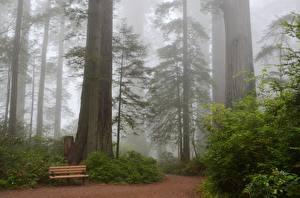 Fotos & Bilder Park USA Bank (Möbel) Bäume Nebel Kalifornien Sequoia Natur