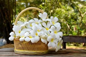 Wallpaper Plumeria Wicker basket White