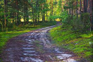 Wallpaper Roads Forests Summer Trees