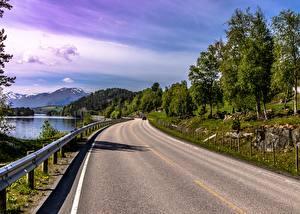 Images Roads Trees Asphalt Nature