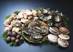 Picture Seafoods Shells Oysters, Scallops