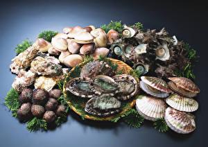 Hintergrundbilder Meeresfrüchte Muscheln Oysters, Scallops