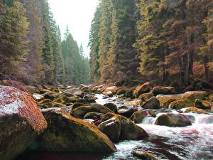 Pictures Stones Autumn Forests Moss Streams