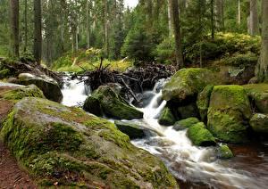 Fotos & Bilder Steine Laubmoose Bach Natur