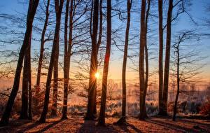Hintergrundbilder Morgendämmerung und Sonnenuntergang Wald Herbst Sonne Bäume Lichtstrahl Natur
