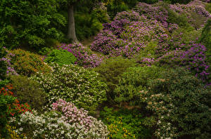 Fotos Schweden Park Rhododendren Strauch Larod Skane Natur