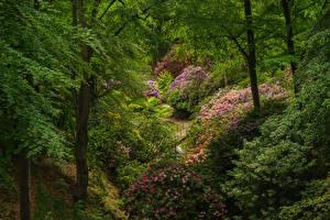 Fotos Schweden Park Rhododendren Strauch Bäume Sofiero castle park Natur
